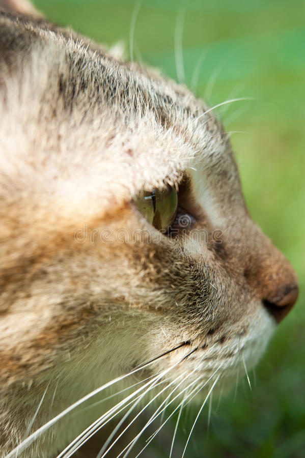 Cat face. Zoom face cat closeup focus at the eye royalty free stock images