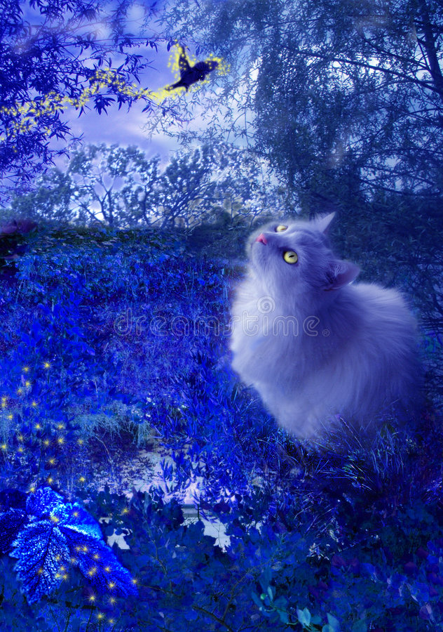 Cat And Fairy Bird At Night Stock Photo