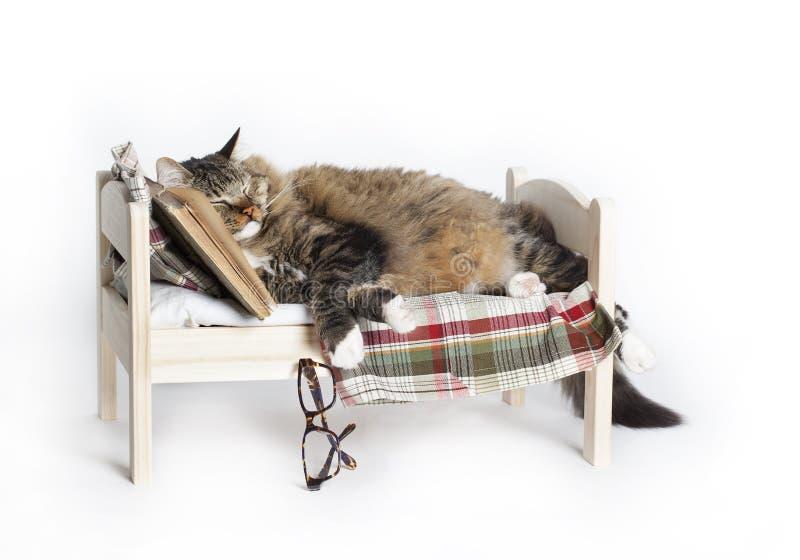 Cat Falls Asleep Reading stock photo