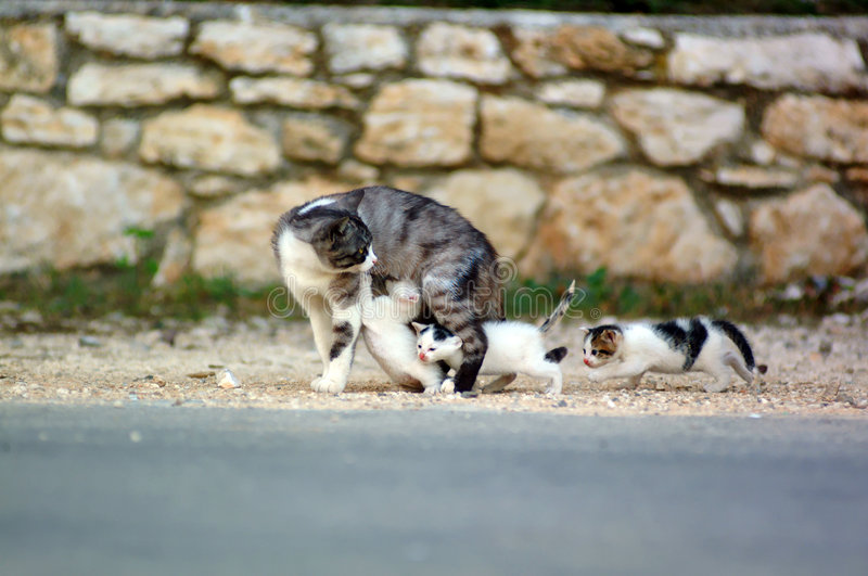 Download Cat Family stock image. Image of cozy, animals, stone - 1360773