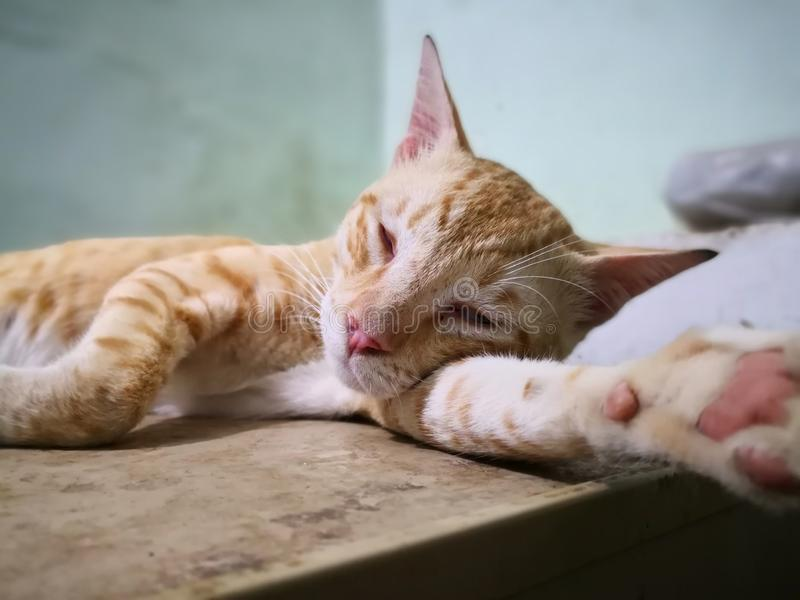 Cat family in the house. Different types of cats living here. royalty free stock photography