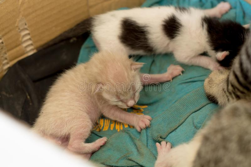 New born kittens in a Carton. Cat family new born kittens in a Carton, mother cat to breastfeed stock images