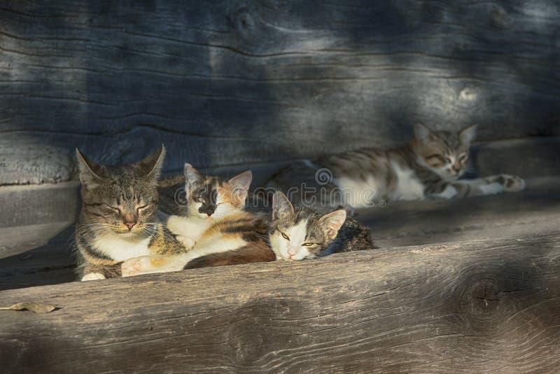 Cat Family Portrait stock image