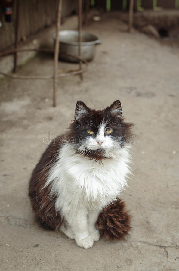 Cat in the farm stock images