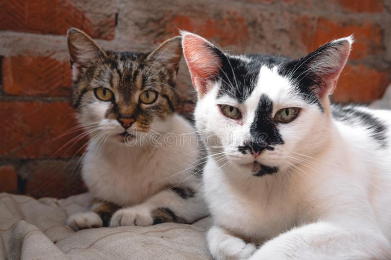 Cat father and mother cat, street cats royalty free stock images