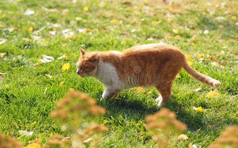Cat, Fauna, Green, Mammal royalty free stock images