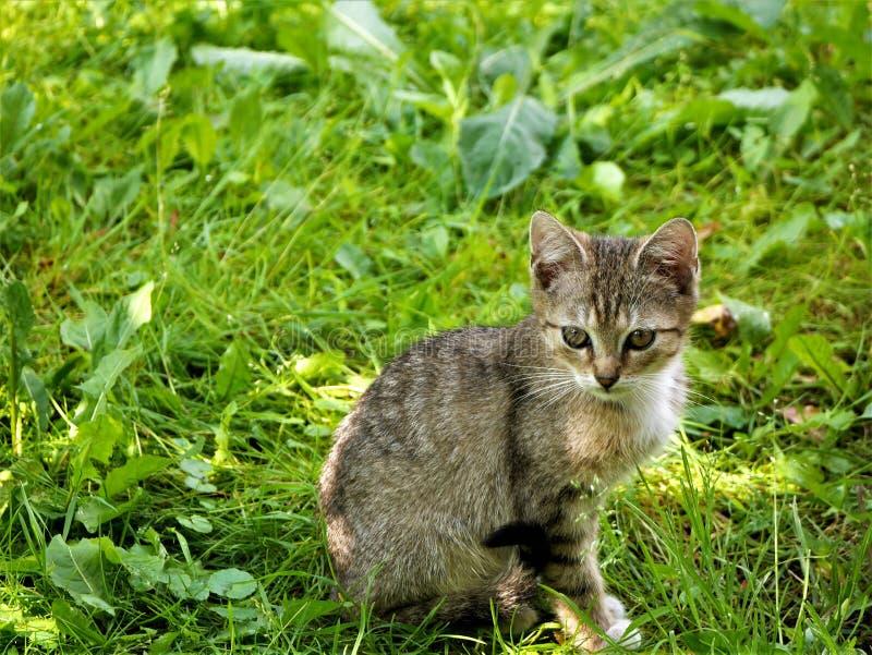 Cat, Fauna, Mammal, Grass stock photos