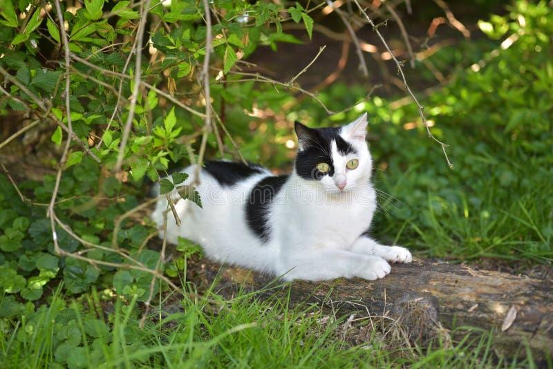 Cat, Fauna, Small To Medium Sized Cats, Cat Like Mammal Free Public Domain Cc0 Image