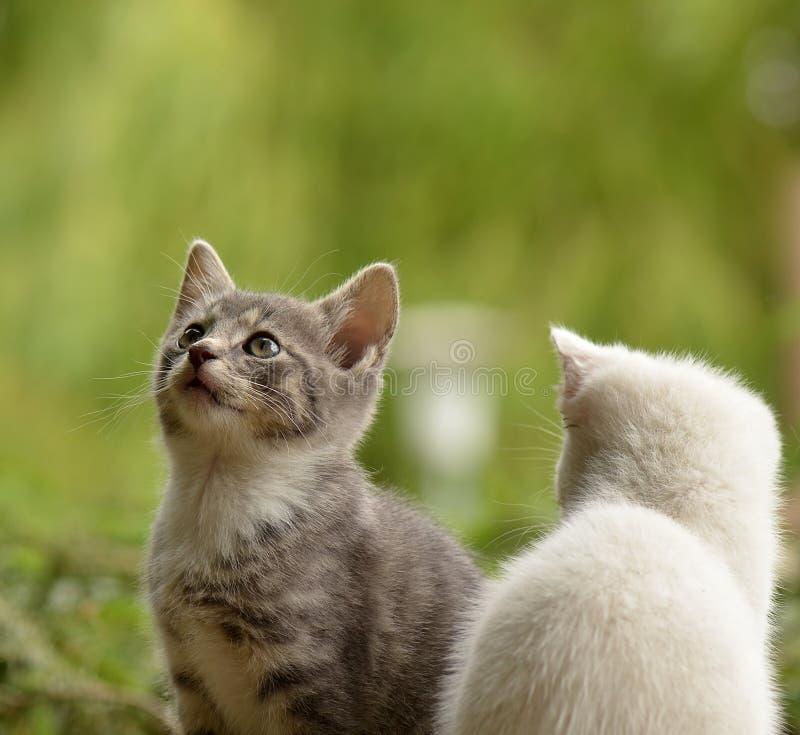 Cat, Fauna, Small To Medium Sized Cats, Cat Like Mammal stock photo