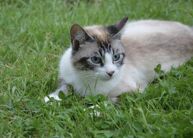 Cat, Fauna, Small To Medium Sized Cats, Whiskers Free Public Domain Cc0 Image