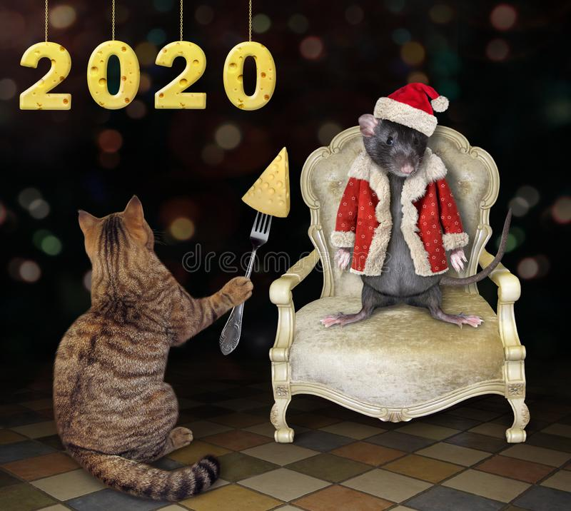 Cat feeds rat in Santa Claus clothes. The cat feeds the rat in Santa Claus clothes with cheese at the party. The rat is sitting in a white armchair. 2020 new stock photo