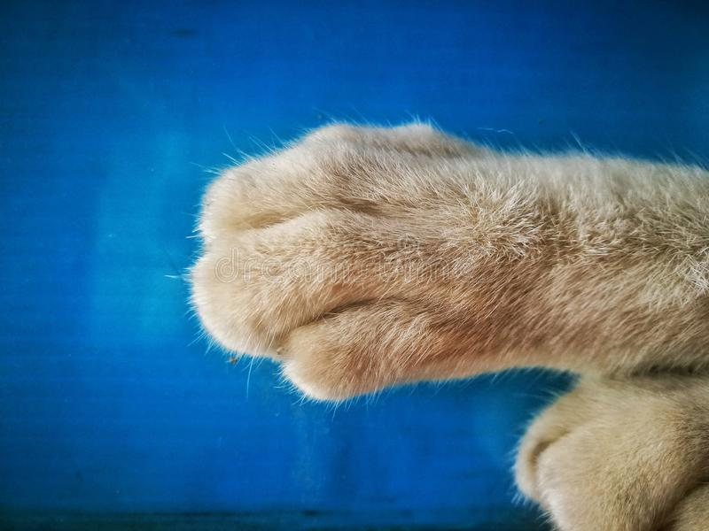 The cat feet. the animal feet. Feline, kitten, fur, foot, pets royalty free stock photos