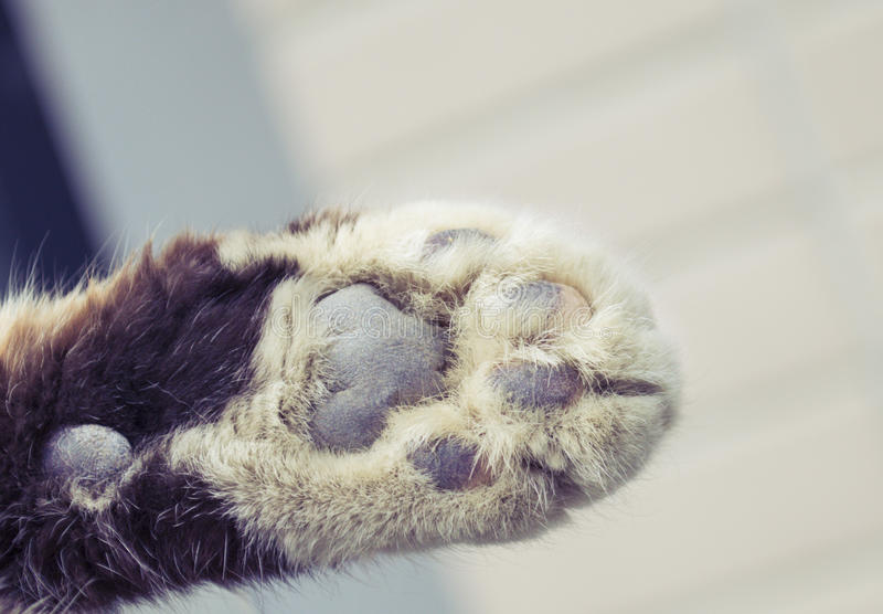 Cat feet close-up. To give a cat feet a close-up royalty free stock images