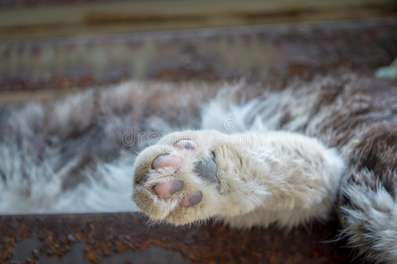 Cat feet. To give a cat feet a close-up on stair stock photography