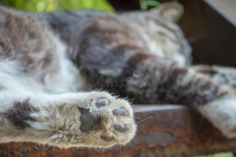 Cat feet. To give a cat feet a close-up on stair royalty free stock photos