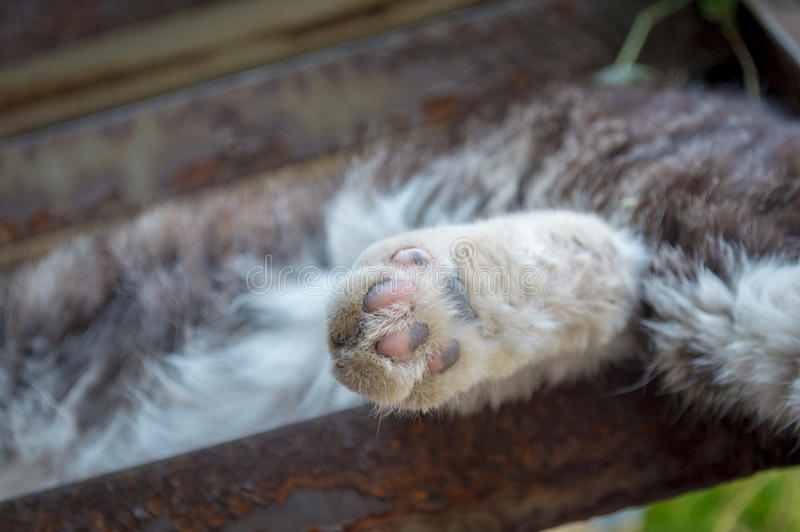 Cat feet. To give a cat feet a close-up on stair stock images