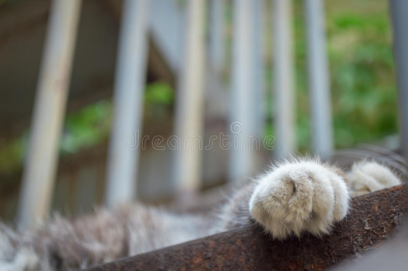 Cat feet. To give a cat feet a close-up on stair stock photos