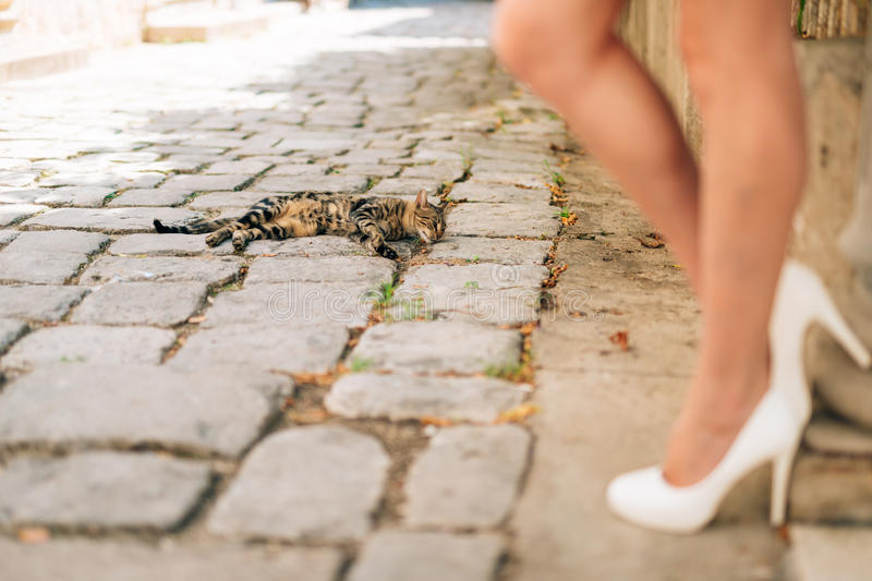 Cat and female legs in white shoes on the pavement on a street i. N the city stock photography