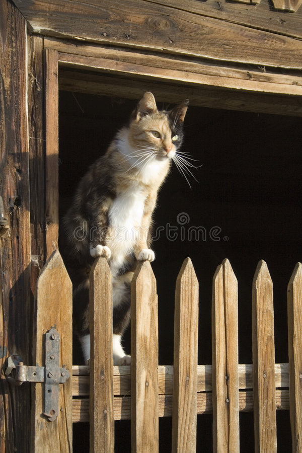 Cat on a fence royalty free stock photo