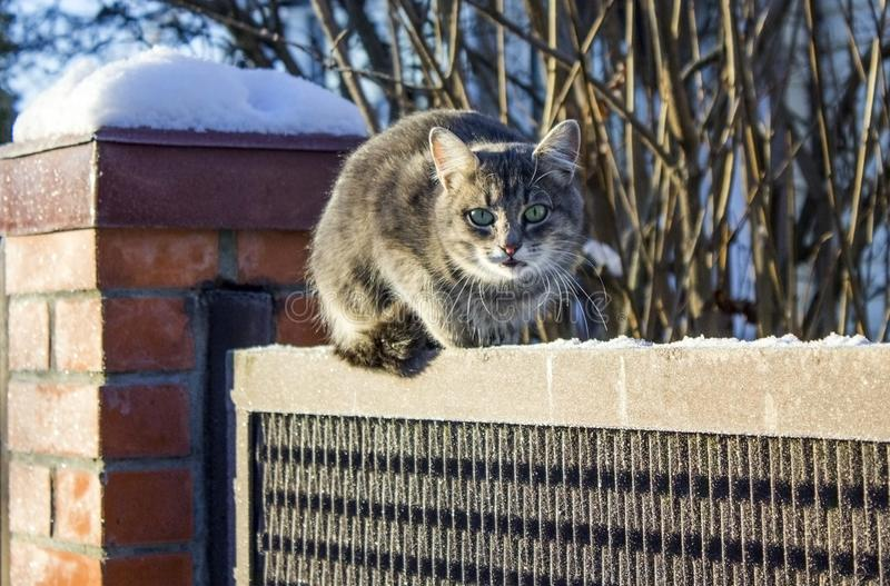 Cat on the fence. A beautiful stray cat lives on the street. She climbed the fence because her feet were freezing stock photography