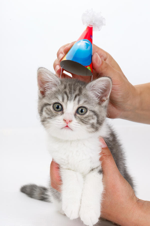 Cat with festive cap on his head in the hands of man. Look straight ahead. royalty free stock image
