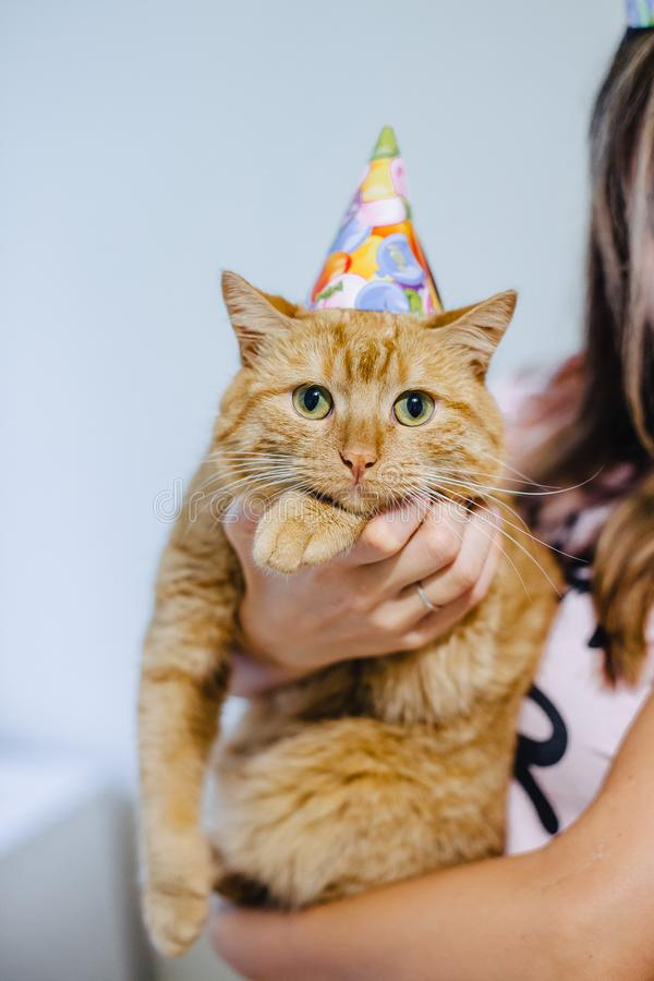 cat in a festive cap royalty free stock image