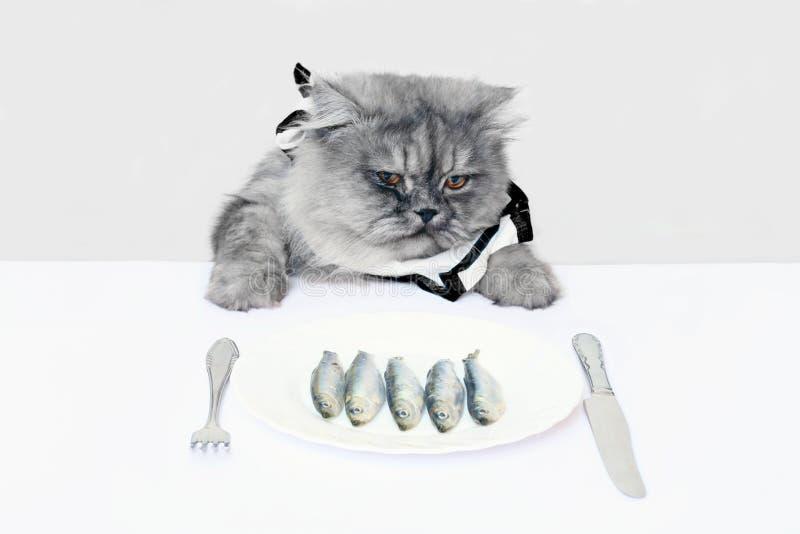 Cat and fish stock photo