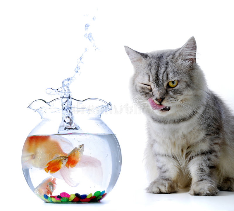 Cat and fish. Cat with fish jumping from the bowl