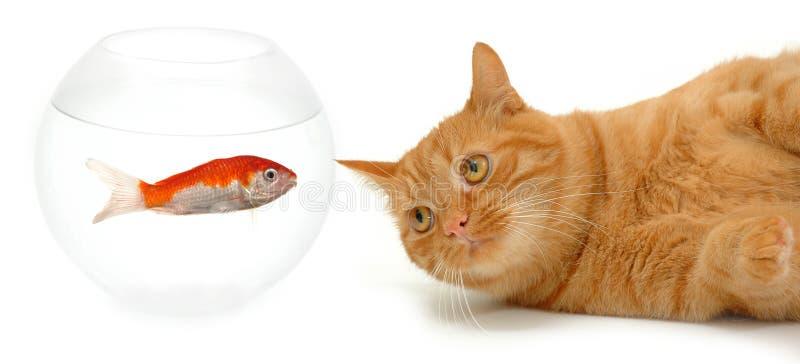 Cat and fish stock photos