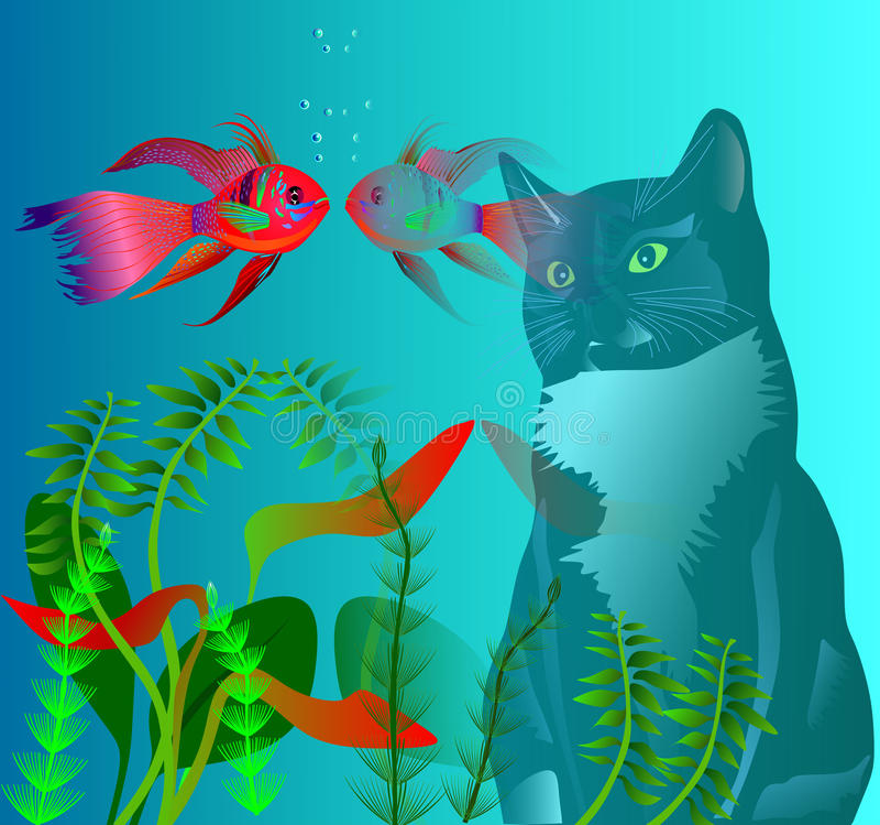 Cat and fish. The cat looks at the fish in the aquarium