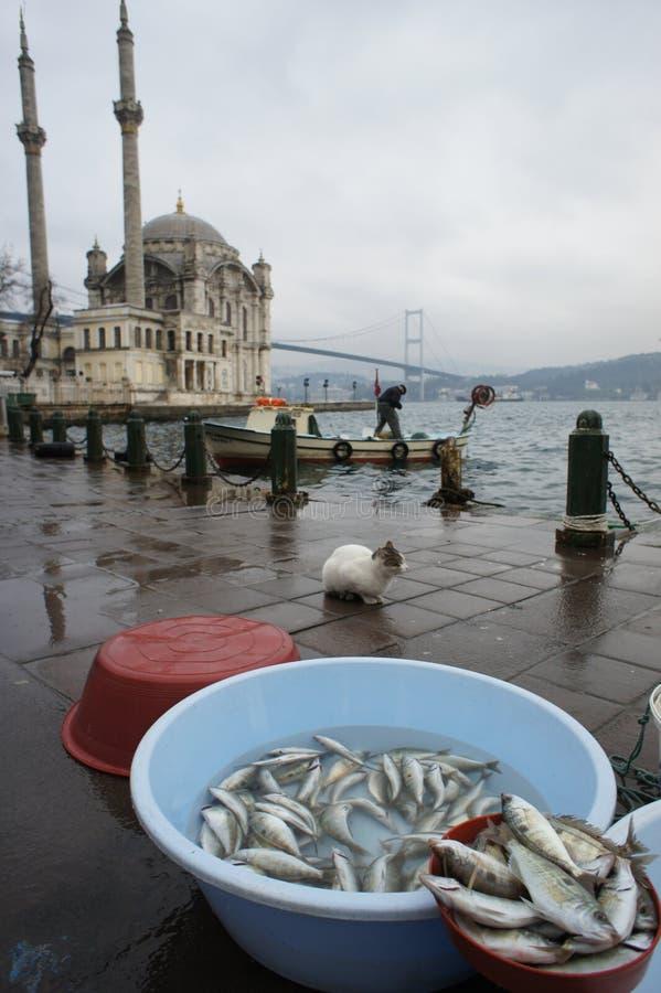 Cat & fish at Ortakoy seaside Istanbul royalty free stock photos