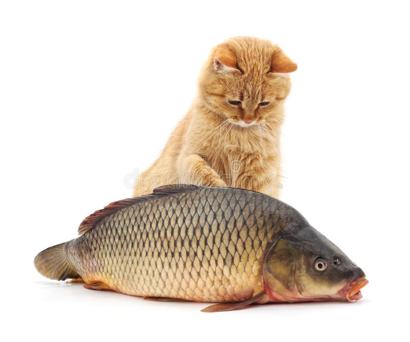 Cat and fish. Cat and fish on a white background stock photography