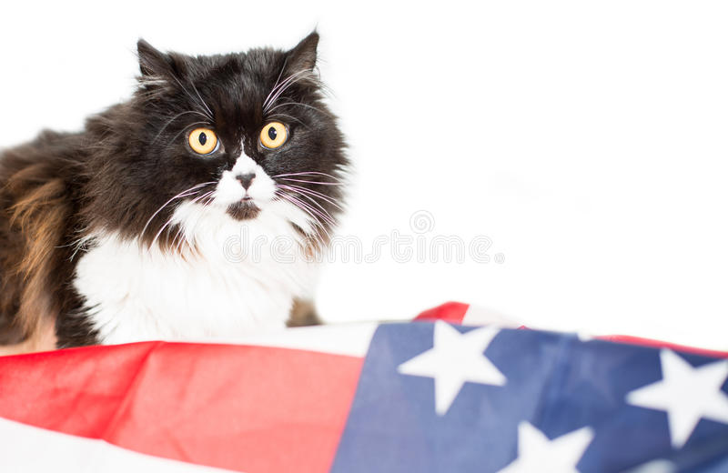 Cat with flag of united state royalty free stock photography