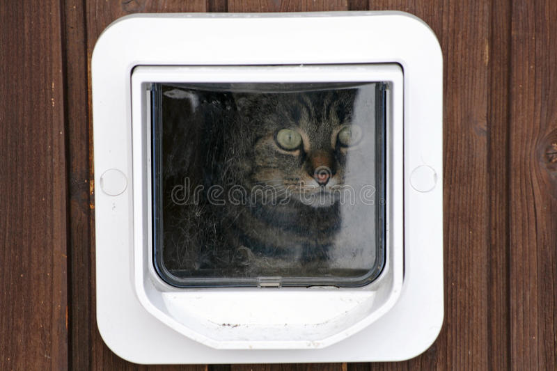 Download The Cat Flap Stock Photography - Image: 33269982