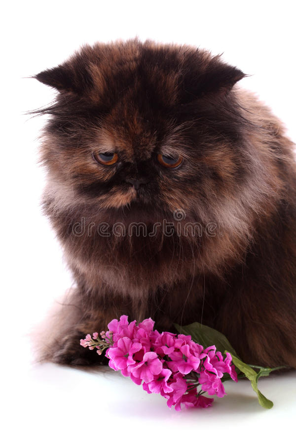 Cat and flower stock photo