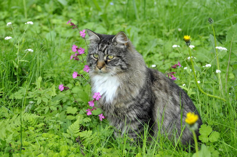 Cat in flower meadow royalty free stock photos