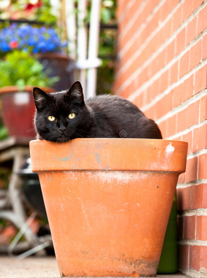 Cat in flower pot royalty free stock photos