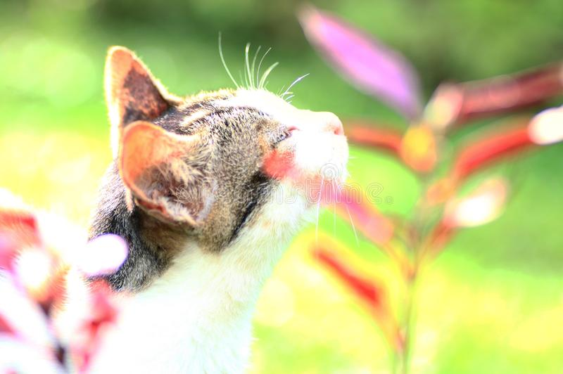 Cat and flower. A cat sniffing a flower stock images