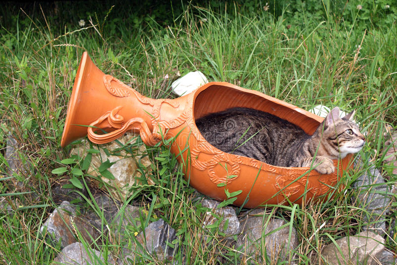 Cat and flowerpot royalty free stock images