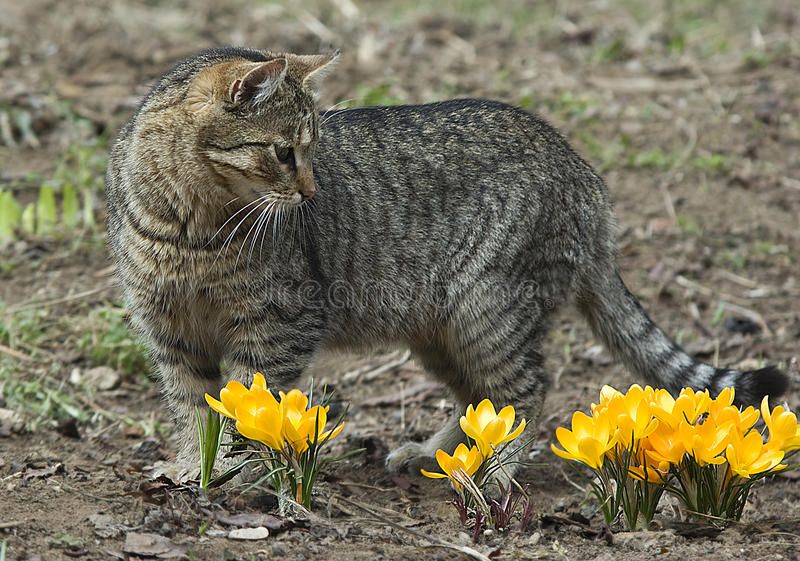 Download Cat and flowers stock image. Image of blooming, closeup - 14182793