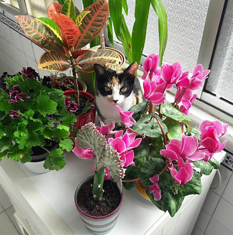 Cat between flowers royalty free stock photo