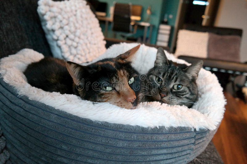 Cat in a fluffy bed stock images