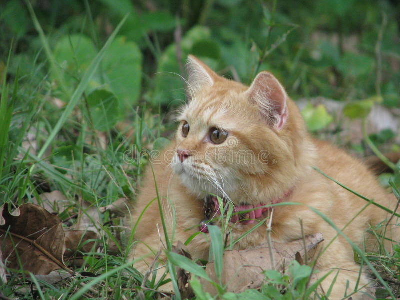 Cat at wild stock photography