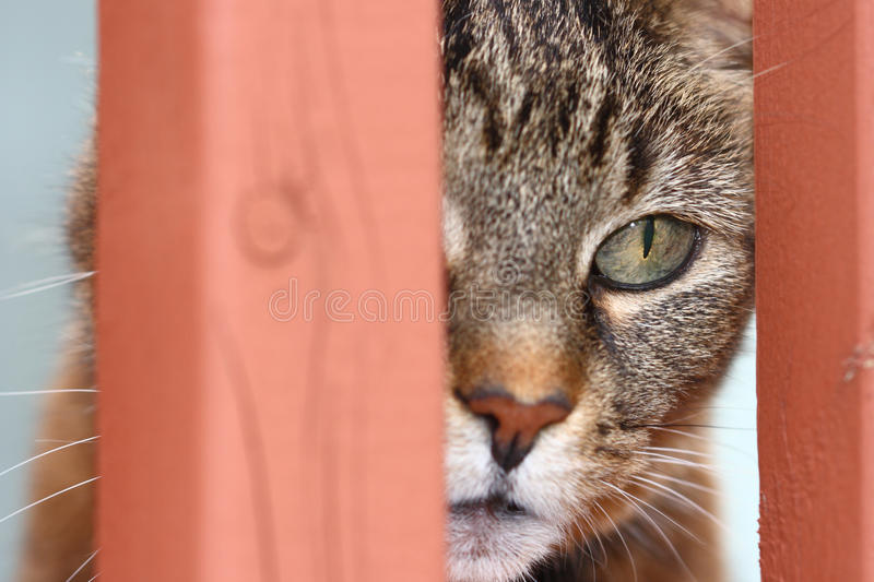 Download Cat focused stock photo. Image of feline, close, cute - 24411132