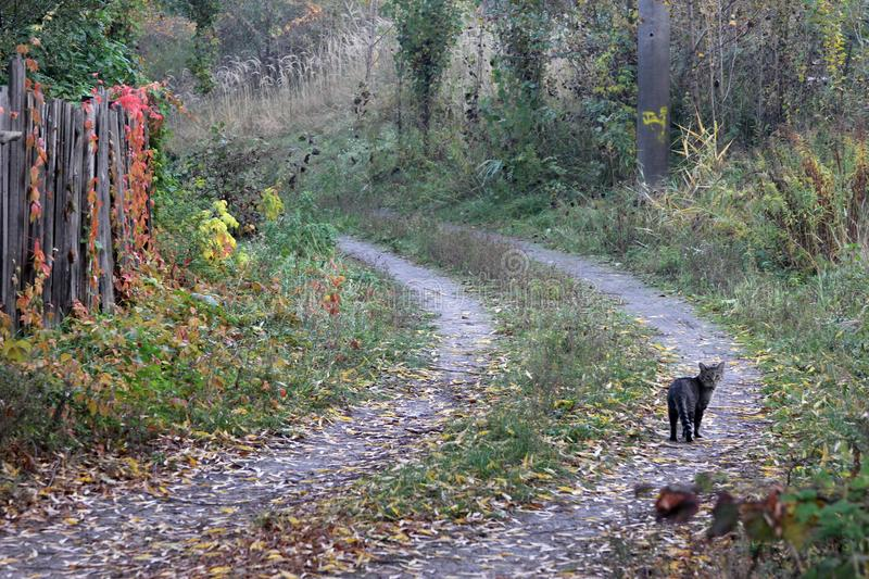 A cat following a road. Cat on a ladder sat down, road, path nature for text stock photography