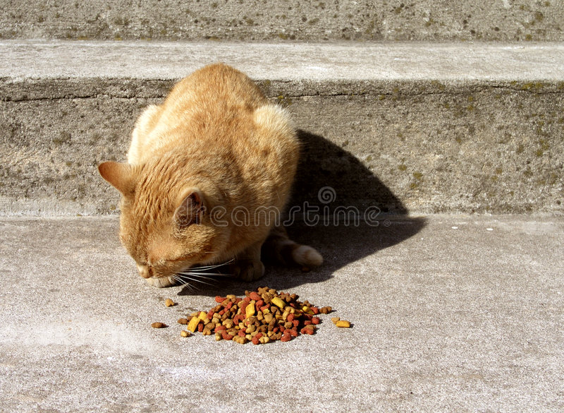 Cat food. Hungry cat, good food stock images