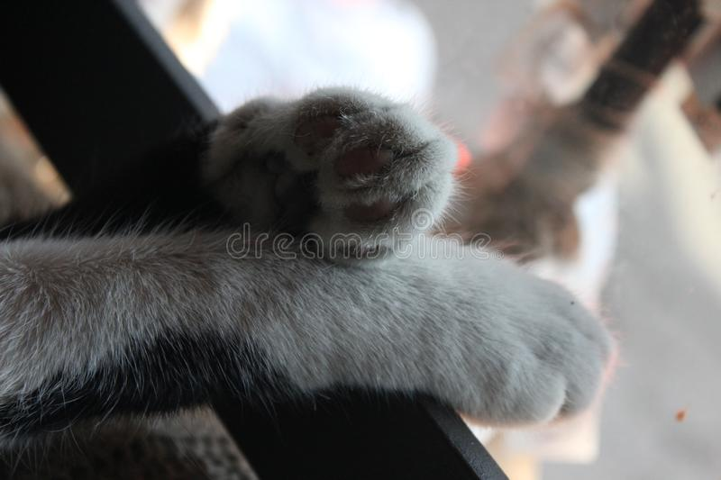 Cat foot white and black paw sweet. Love animal pets royalty free stock photos