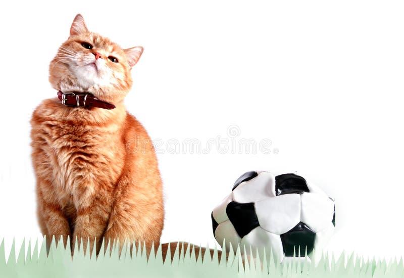 Cat Footballer Near Ball fotografia stock libera da diritti