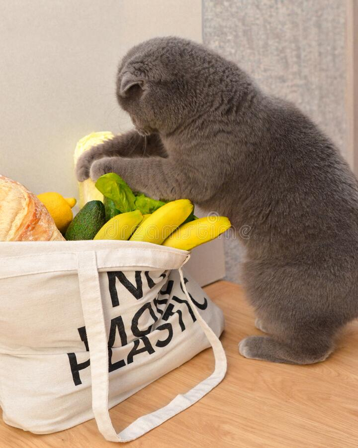 A cat and groceries in eco bag stock photo