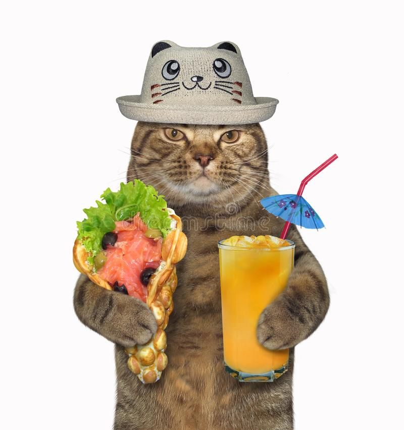 Cat in a funny hat with soft waffles royalty free stock photos